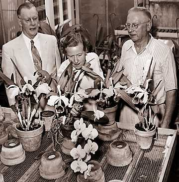 James S. Whitcomb, Mrs. A.D. Wilkinson and long-time Whitcomb gardener William Crichton inspect the Whitcomb orchid collection at the conservatory on Belle Isle.