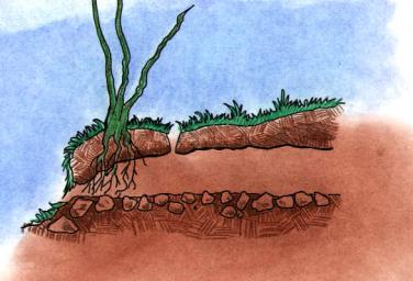 Cut away drawing of a boreal toad burrow. (created by Dale Crawford