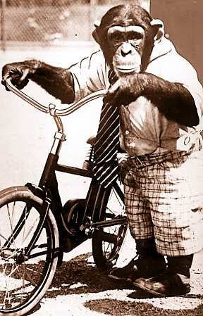 Jo Mendi, a chimpanzee, came to the zoo in 1932 after a career in the movies and on Broadway. It was the middle of the Great Depression and with so many Detroiters in dire straits the zoo society didn't feel it could spend the money to acquire the chimp, so Director Millen purchased him with his own money.