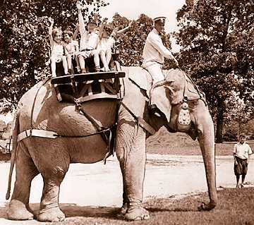 For a nickel, you could ride Paulina the elephant, as these kids are doing in the summer of 1933. Paulina also helped with the construction of the zoo.