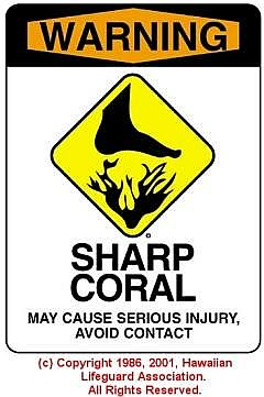 SHARP CORAL - © 1986, 2001, Hawaiian Lifeguard Association. All Rights Reserved.